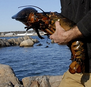 the old lobster and the sea... (parafraseando)
